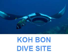 Koh Bon dive site information and dive map