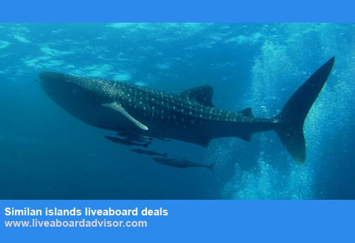 Liveaboard Advisor Similan islands liveaboard deals