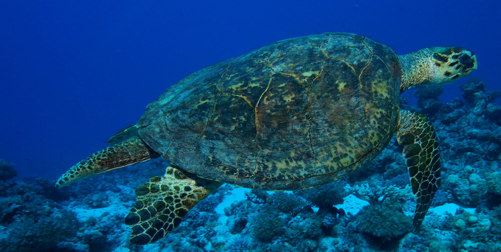 Turtle rock at the Similan islands